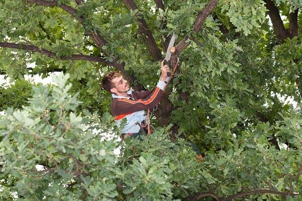 Baumpfleger gratis Musterbewerbung